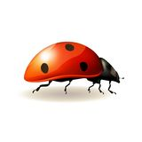 Ladybird. Vector illustration. Royalty Free Stock Photography