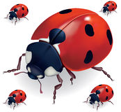 Ladybird vector illustration Stock Photos