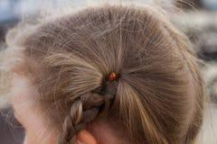 Ladybird włosy lato Zdjęcia Royalty Free
