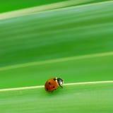 Ladybird walk Stock Image