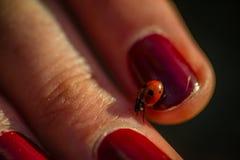 Ladybird walking across hand stock photography