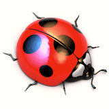 Ladybird  on white background. Stock Images