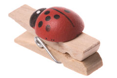 Ladybird Wooden Peg Isolated Stock Photo