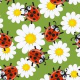 ladybirds делают по образцу безшовное иллюстрация штока