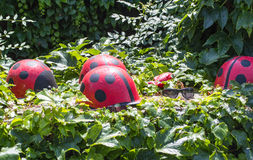 Ladybirds и стекла Стоковое Фото