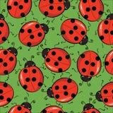 ladybirds предпосылки безшовные Стоковое Изображение RF
