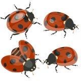 Ladybirds установили изолированный на белой предпосылке r иллюстрация вектора