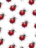 Ladybirds royalty free illustration