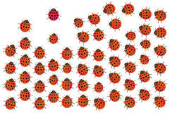 Ladybirds. Graphic design red ladybird family Royalty Free Stock Image