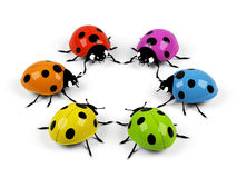 Ladybirds. Stock Photography