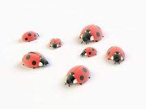 Ladybirds Royalty Free Stock Image