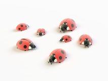 Ladybirds Royalty Free Stock Image