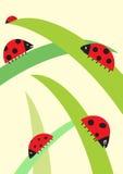 Ladybirds. Five ladybirds. Simple  illustration Royalty Free Stock Photo