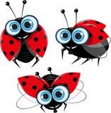 Ladybirds Stock Photo