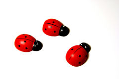 Ladybirds. Artificial ladybirds on a white background stock photography