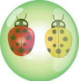 Ladybirds in bubble Royalty Free Stock Photography