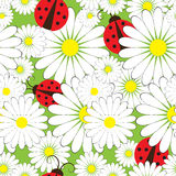 Ladybirds and chamomile Royalty Free Stock Photo