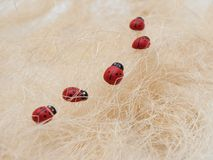 Ladybirds in a cue Royalty Free Stock Images
