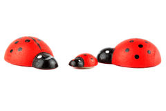Ladybirds family Royalty Free Stock Photos