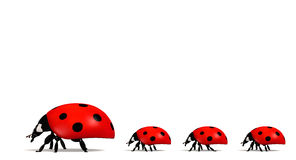 Ladybirds in a horizontal row Stock Photos