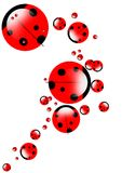 Ladybirds illustrations Stock Photography