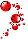ladybirds ilustracji Fotografia Stock