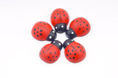 Ladybirds isolated Stock Images