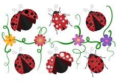 Ladybirds pattern Stock Photo