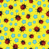 Ladybirds pattern-01 Stock Photos