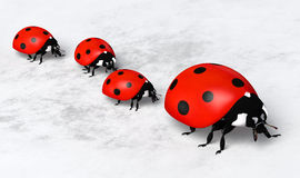 Ladybirds in a row Stock Images