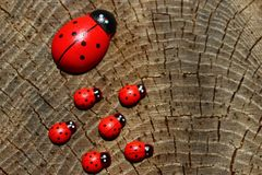 Ladybirds on a tree trunk royalty free stock images