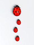 Ladybirds in a vertical row stock illustration