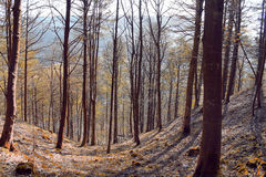 Ladybower drzewa Fotografia Stock