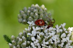 Ladybug και η αράχνη 01 Στοκ Εικόνα
