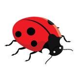 ladybug κόκκινο Στοκ φωτογραφίες με δικαίωμα ελεύθερης χρήσης