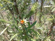 02 ladybug Πολύ συμπαθητικός Στοκ εικόνες με δικαίωμα ελεύθερης χρήσης