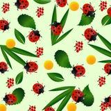 ladybug πρότυπο άνευ ραφής Στοκ Φωτογραφίες
