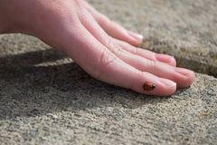 Ladybug σε ετοιμότητα Στοκ φωτογραφία με δικαίωμα ελεύθερης χρήσης