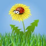Ladybug σε μια πικραλίδα Στοκ Εικόνες