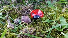 Ladybug στα ξύλα στοκ εικόνες