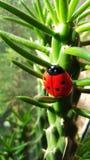 Ladybug στα ξύλα στοκ φωτογραφία με δικαίωμα ελεύθερης χρήσης