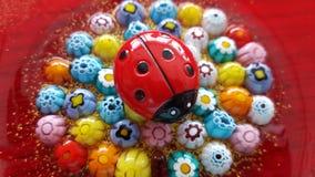 Ladybug στα λουλούδια Στοκ Φωτογραφίες