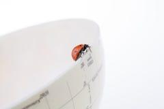 Ladybug στη λίγο ζωηρόχρωμη πρότυπη σφαίρα Στοκ φωτογραφία με δικαίωμα ελεύθερης χρήσης