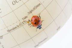 Ladybug στη λίγο ζωηρόχρωμη πρότυπη σφαίρα Στοκ Εικόνες