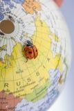 Ladybug στη λίγο ζωηρόχρωμη πρότυπη σφαίρα Στοκ Φωτογραφία