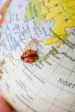 Ladybug στη λίγο ζωηρόχρωμη πρότυπη σφαίρα Στοκ εικόνες με δικαίωμα ελεύθερης χρήσης