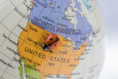 Ladybug στη λίγο ζωηρόχρωμη πρότυπη σφαίρα Στοκ Εικόνα