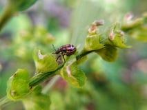 Ladybug στον κλάδο Στοκ φωτογραφίες με δικαίωμα ελεύθερης χρήσης