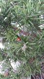Ladybug στο πράσινο στοκ φωτογραφία