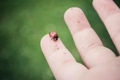 Ladybug στο χέρι του παιδιού Στοκ εικόνα με δικαίωμα ελεύθερης χρήσης